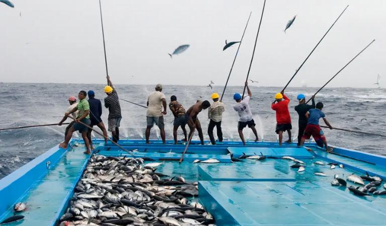 وزارة الثروة السمكية تصاريح العمالة الأجنبية على سفن الصيد