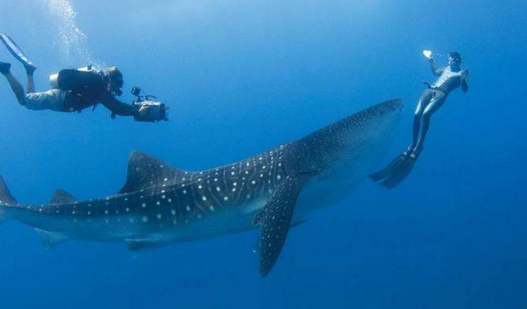 السياحة جزر المالديف تفتح حدودها في 15 يوليو Maldives